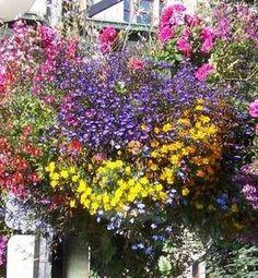 colorful flower baskets hanging on lamppost victoria. Black Bedroom Furniture Sets. Home Design Ideas