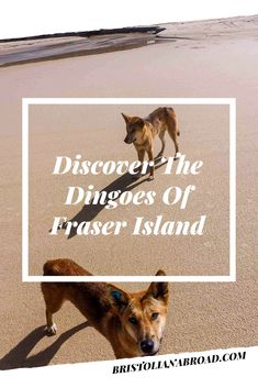 Fraser Island, Travel Usa, Things To Do, Paradise, Destinations, Africa, Australia, Vacation, Movie Posters