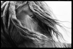 Sable Island Horses photo exhibit this summer NS Museum of Natural History