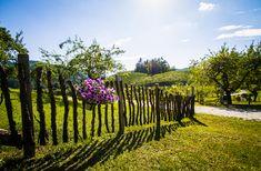 In der Buschenschank - Südsteiermark / Austria, Styria Light And Shadow, Vineyard, Explore, Outdoor, Outdoors, Vine Yard, Vineyard Vines, Outdoor Games, The Great Outdoors