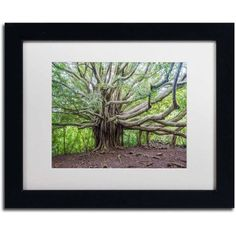 Trademark Fine Art Banyan Canvas Art by Pierre Leclerc, White Matte/Black Frame, Size: 11 x 14, Multicolor