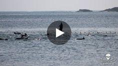 Le massacre de dauphins dans la baie de Taiji de nouveau dénoncé  :'( sniff :'( sniff BOURREAU :'( ASSASSIN :'( SAUVAGE :'( CONNARD :'( POURRI :'( DEBILE :'( sniff :'( sniff  AMORE