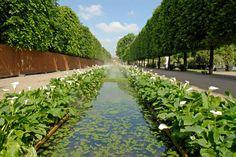 Arum Lily canal. Jardins, Jardin aux Tuileries. Adore using Arum Lilies.