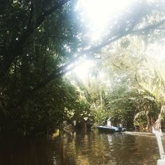 Afternoon boat tour of the Tortuguero National Park jungle canals #costaricaexperts