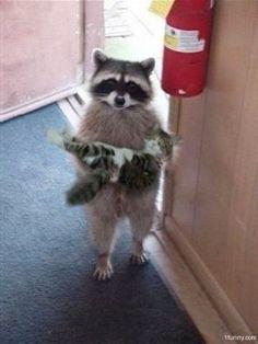 Raccoon with kitty