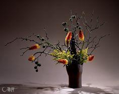 出回ることの少ない、実つきのからたちの枝に巡り合いました。枝ぶりをいかしながら整理し、実を強調します。 ユニークな形態のトリトマのオレンジ色と黄色のソリダコが、花器の口元をあざやかに引き締めてくれました。花材:からたち、トリトマ、ソリダコ 花器:陶器花器(勅使河原宏)The golden apple branches were neatened to foster this rare encounter with the fruits that hang from the branches. The bright orange color of the unique shaped red-hot-poker and the yellow of goldenrod build a sense of tension at the mouth of the container. Container:Ceramic vase by Hiroshi Teshigahara #ikebana #sogetsu