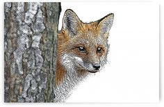 Bev Snider Art Collection // Inspired by Nature Fox, Nature, Stuff To Buy, Animals, Inspiration, Biblical Inspiration, Naturaleza, Animales, Animaux
