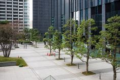 Shiodome Sumitomo Building (汐留住友ビル). / Architect : Nikken Sekkei (設計:日建設計).