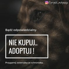 #przygarnij #psa #akcjaspołeczna #pomoc #niekupujprzygarnij #edukacja #pies #adopcja #schronisko #odpowiedzialność #przygarnijpsa Instagram, Movies, Movie Posters, Films, Film Poster, Cinema, Movie, Film, Movie Quotes