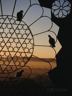 Birds Resting on Lattice Window, Jaipur, Rajasthan, India