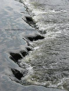 Rideau River in Ottawa Ottawa, Canada, River, Beach, Nature, Photography, Outdoor, Outdoors, Naturaleza