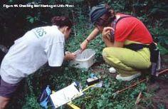 Figure 44. Checking leaf litterbag at Little River. - click to enlarge