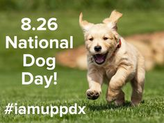 August 26th! National Dog Day!