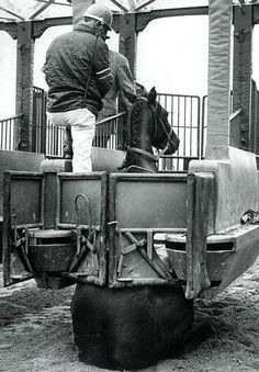 """""""Irish Course"""" a two year old filly was being broke to the starting gate when she decided to sit down. She eventually went on to win 5 out of 8 races. :)"""
