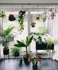 Gorgeous display of house plants