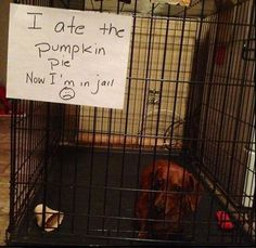 "15 Of The Hilarious ""Dog Shaming"" Photos"