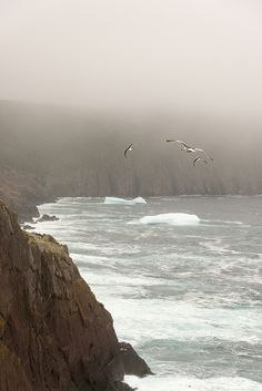 Fog, Gulls and the Ocean - Newfoundland