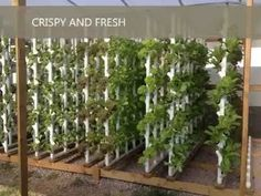 How To Set Up vertical Garden Tower part 1 . Grow your own vegetables Hypnotica - YouTube