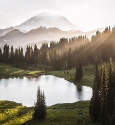 Mount Rainier National Park, Washington, U.S. | Photography by © Scott Kranz (@scott_kranz) #EarthOfficial