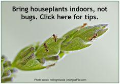 Bring Houseplants Indoors – But Not Bugs Tropical Leaves, Houseplants, Gardening Tips, Photo Credit, Bugs, Life Hacks, Wordpress, Bring It On, Indoor