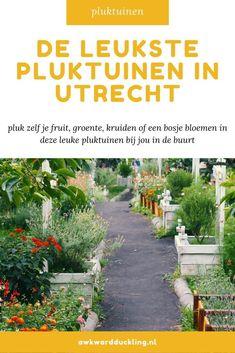 In een pluktuin kun je zelf jouw bosje bloemen of verse groente en fruit plukken. Er zijn pluktuinen te vinden door heel Nederland, van kleine tuinen bij particulieren tot grote akkers behorend bij het erf van een boer. Ik zet de leukste pluktuinen in Utrecht op een rij. Good Vibe, Utrecht, Awkward, Holland, Travelling, Trips, Culture, World, Viajes