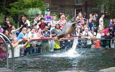 Central Park Zoo, New York City