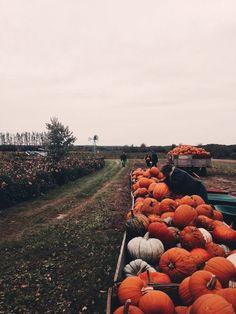 lil pumpkins