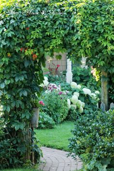 Aiken House & Gardens: Our Late August Garden // Virginia Creeper on the arbor