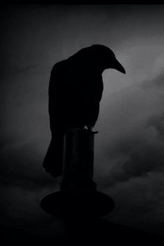 Raven / Black and White Photography