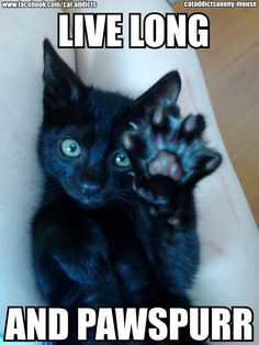 Live Long And Pawspurr via C.A.A. - cat addicts anony-mouse #lolcats #hahacats