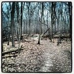 Maple Grove Forest Preserve, Downers Grove, IL Forest Preserve, Downers Grove, My Kind Of Town, Childhood Memories, Trail, Chicago, Instagram