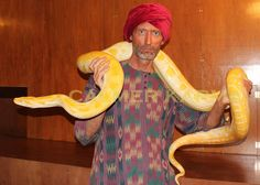 Snake Charmer & Snake Performer walkabouts for corporate parties and entertainment; London and UK Corporate Entertainment, Party Entertainment, Arabian Party, Uk Parties, Bedouin Tent, Comedy Acts, Yellow Snake, Walkabout, Magic Carpet