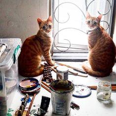 Early Morning, Studio, Cats, Instagram, Gatos, Studios, Cat, Kitty, Kitty Cats
