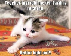 Better Pictures - Funny Animal Pictures Of The Day – 48 Pics To anybody wanting to take better photographs today Cute Animal Memes, Funny Animal Quotes, Animal Jokes, Cute Funny Animals, Funniest Animals, Cat Quotes, Animal Humour, Funny Quotes, Cute Kittens