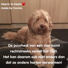 Heart Quotes, Hearts, Animals, Animales, Animaux, Animal Memes, Animal, Heart, Animais