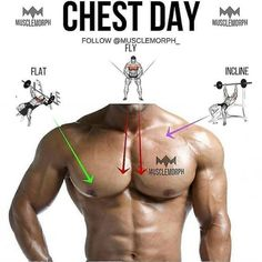 """Chest day ➖ Main chest muscle Pec major 2 """"heads"""", upper (clavicular head) and lower (sternal head). The upper head's fibres run downwards ⬇️ as they are attached to the clavicle with the mid fibres running horizontally ⬅️ (because they attach to the ce"""