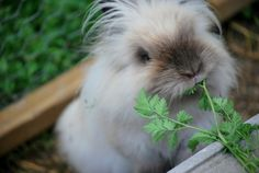 Bunny has a bite to eat - September 5, 2012