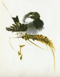 Mirko Hanák illustrations for Alfred Könner's Bilderzoo Watercolor Animals, Watercolor And Ink, Watercolor Illustration, Watercolor Paintings, Bird Paintings, Animal Sketches, Animal Drawings, Tinta China, Zen Art