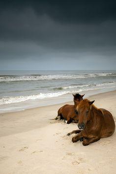 Horses on the beach. I wAnt to go to North Carolina one day to see the wild horses on the beach. All The Pretty Horses, Beautiful Horses, Animals Beautiful, Beautiful Sky, Beautiful Babies, Animals And Pets, Cute Animals, Wild Animals, Mundo Animal