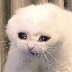 Once again, cat memes are best used for reactions like this. If we feel extremely sad, this cat represents our emotions more than words do. Sad Cat Meme, Funny Cat Memes, Funny Shit, Funny Cats, Funny Animals, Cute Animals, Weird Cats, Funny Laugh, Crying Meme