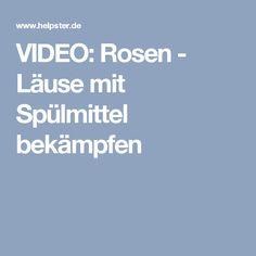 VIDEO: Rosen - Läuse mit Spülmittel bekämpfen