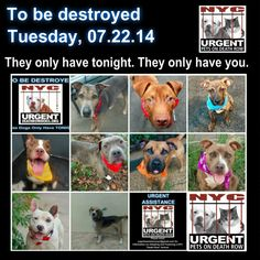 Please share everywhere to help secure these beauties a future they so deserve. We are their voice & we only have tonight.  To rescue a Death Row Dog, Please read this: http://urgentpetsondeathrow.org/must-read/   To view the full album, please click here:    https://www.facebook.com/media/set/?set=a.611290788883804.1073741851.152876678058553&type=3