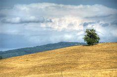 Piccolo albero solitario ad Arcille di Campagnatico - Little alone tree in Arcille of Campagnatico (Maremma, Tuscany, Italy) by ricsen, via Flickr