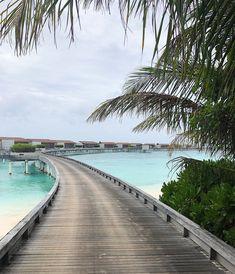 Blog Post: Maldives Visual Diary   Park Hyatt Maldives Hadahaa Snorkelling, Visual Diary, Maldives, Beautiful Homes, Paradise, Boat, Island, Park, Water