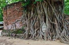 Fig tree claims Buddha head in Wat Mahathat, Ayutthaya, Thailand.