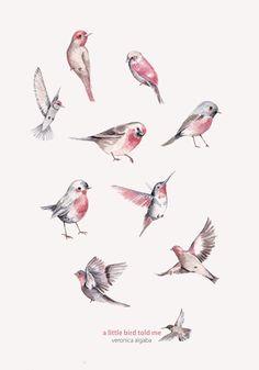 Los pájaros de Verónica Algaba
