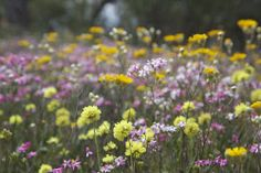 TWA-0045915 © WestPix Wildflowers at Coalseam, north of Mingenew. A classic day in September. Picture: Stephen Scourfield The West Australian