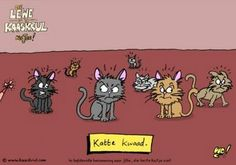 Kaaskrul Afrikaans, Cat Art, Language, Kitty Cats, Funny, Van, Inspire, English, Education