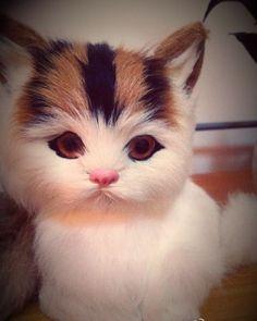 A cat or owl? HAHA