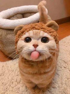 kediciiikk Cute Cat Memes, Funny Cute Cats, Cute Baby Cats, Cute Little Animals, Cute Cats And Kittens, Cute Funny Animals, Kittens Cutest, Cute Dogs, Pretty Cats